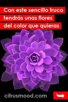 Con este sencillo truco tendrás unas flores del color que quieras Floral, Plants, Etsy, Fitness, Bird Paintings, Gardening, Garden, Drum, Sideboard Cabinet