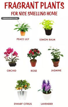Fragrant houseplants for a nice smelling home. We all know the importance of plants. They give us fresh air to breath and we all know it very well, yet many avoid planting at home. Container Gardening, Gardening Tips, Organic Gardening, Indoor Gardening, Gardening Shoes, Texas Gardening, Gardening Services, Gardening Supplies, Plantas Indoor
