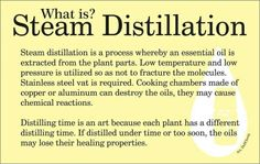 Young Living uses steam distillation. What Is Essential, Yl Essential Oils, Therapeutic Grade Essential Oils, Young Living Essential Oils, Steam Distillation, Parts Of A Plant, Best Oils, Young Living Oils, Homeopathy
