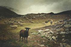 sheep in the valley  by KatzenSprung (Carmen Gonzalez)