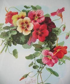 Old Paul de Longpre FLORAL Print Vintage Nasturtiums Large Signed