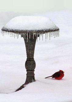 Pajarito nieve