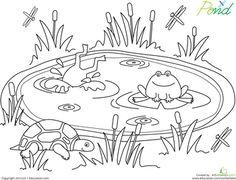 Connections ~ Pond Life Lesson Plans, Unit Study, Lapbooks ...