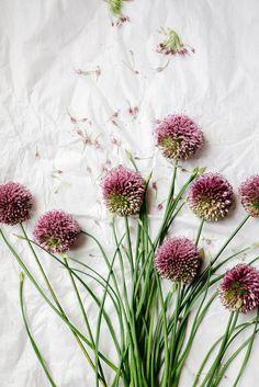 garlic flower by  Luisa Brimble - ✿Floralls✿