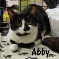 How about a roommate who cleans her own dishes :)  This pretty black and white tuxedo (with patches!) is Abby, a sweet mama rescue cat who came in with her kittens, and is looking for her forever home :)  Want to help Abby and her friends?  Please consider donating directly to the sanctuary, or buy a piece of jewelry from my site < https://www.etsy.com/shop/HawksReachDesigns?ref=hdr_shop_menu > and I will donate part of the proceeds on your behalf. Thanks in advance for your help :)
