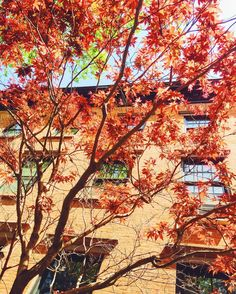 Fall colors in the #spring  #brooklyn #nyc #brooklynheights #couleurs #colors #colours #orange #architecture #nycarchitecture #facade #maison #house #arbre #tree #colorful #blogvoyage #travelblog #voyage #travel #lundi #monday #sunnyday #soleil #blogueuse #francaisauxusa #thelazyfrenchie #unebelgeanyc #belgianblogger | Photo de @the_lazy_frenchie