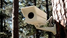 South African firm Porky Hefer Design PhD introduces a security camera-shaped birdhouse designed to keep non-winged trespassers at bay. Bird House Plans, Bird House Kits, Vernacular Architecture, Architecture Design, Bird House Feeder, Bird Feeders, Birdhouse Designs, Bird Houses Diy, Homemade Bird Houses