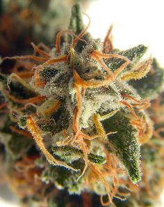 Buy Marijuana Online I Buy Weed online I Buy Cannabis online I Edibles Buy Cannabis Online, Buy Weed Online, Medical Cannabis, Cannabis Oil, Cbd Oil For Sale, Smoking Weed, Ganja, Hemp Oil, The Best