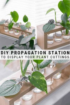 DIY Plant Propagation Station: A Cute Way to Propagate Plants in Water - - A DIY plant propagation station is a cute way to display plants while propagating them in water. The glass tubes also help you monitor root development! Indoor Garden, Garden Plants, Indoor Plants, Outdoor Gardens, House Plants Decor, Plant Decor, Plant Of Life, Plant Crafts, Decoration Plante
