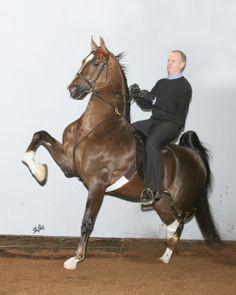 Undulata's Nutcracker is a record breaking stallion and #1 World Champion Sire.
