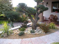 Bonsai Garden, Garden Plants, Olive Tree, Plantation, Green Garden, Fruit Trees, Pond, Garden Design, Floral Design