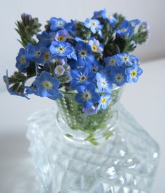 Forget-me-nots, my favorite flower. :)