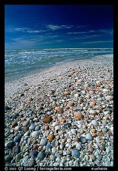 Sanibel Island, FL-beach covered with sea shells!