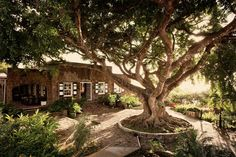 Live Like a Local and Save at Montpelier Plantation, Nevis