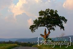 Lone Tree in the Summer