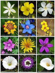 Flower - Wikipedia, the free encyclopedia, <3, <3, <3 flowers!!!