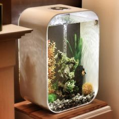 Biorb Fish Tank, Cool Fish Tanks, Aquascaping, Aquarium, Architecture, Fishbowl, Goldfish Bowl, Arquitetura, Aquarium Fish Tank