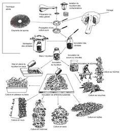 Les 7 meilleures images de Champignons   culture champignon, champignon, faire pousser des ...