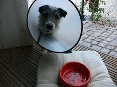 Toepferfreunde: Hunde - Tasse