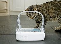 The SureFeed Microchip Pet Feeder has a sealed bowl which keeps food fresher and free of flies.