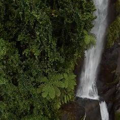 """River of Eden: """"In the rainy season, you can't be out of sight of a waterfall and bars of light come through the canopy that is nothing short of a laser show—in nature,"""" says Nate Bricker, a river-runner who made some of the earliest descents on the Navua River. The Upper Navua River, often dubbed the 'River of Eden', slices through the heart of Fiji's largest island and is unique not just for its staggering beauty, but for its protection.  That is unusual is this part of the world where…"""