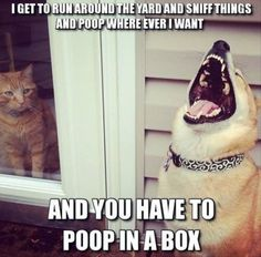 Dog funny I get to run around the yard and sniff things and poop where ever I want   and you have to poop in a box