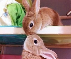 Cute rabbits.