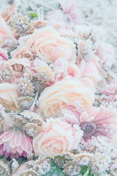 Pretty Roses #Petals