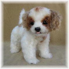 Cavalier King Charles Spaniel puppy omg
