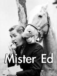 Mister Ed, the talking horse and Wilbur Post (Alan Young) - an American television situation comedy produced by Filmways and first aired from January 5 to July and then on CBS from October 1961 to February I loved this show. Steeve Mcqueen, Mister Ed, Cinema Tv, The Lone Ranger, Old Shows, Vintage Tv, Vintage Horse, Vintage Stuff, Horses