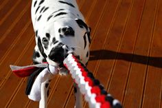DIY for Dogs: Square Knot Fleece Tug Toy