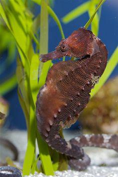 20 Fashion Hair Clip Tortoise Fish Dolphin Octopus Shrimp Crocodile Penguin Frog