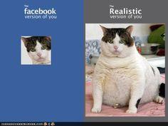 #cat #animal #humor