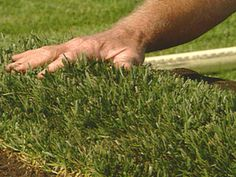 SOD FARMING TIPS - Delta Bluegrass is a 2,000-acre farm in Stockton, Calif., that grows the flawless turf seen in upscale residential landscaping, golf courses and even sports stadiums.