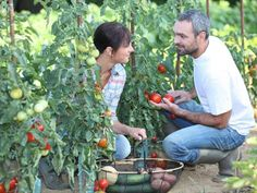 NO MORE WEEDS. Some years ago we decided to set out 18 tomato plants and--wouldn't you know it?--the area we chose for the garden was covered with Mary Hunt, Modern Agriculture, Tomato Plants, Money Tips, Garden Projects, Bestselling Author, Diy Tutorial, Gardening Tips, Weed