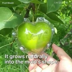 Best 12 Learn about the dream rose pots diy – SkillOfKing. Cool Inventions, Aquaponics, Growing Plants, Creative Food, Garden Projects, Food Art, Gardening Tips, Garden Design, Diy And Crafts