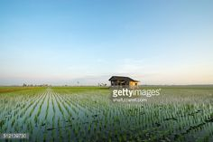 Stock Photo : Abandoned house in paddy field