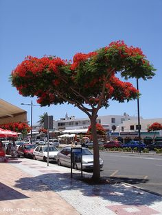 Adeje, Tenerife, Canary Islands.  https://victortravelblog.com/2012/07/05/tenerife-canary-islands/