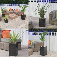 Palm Tree Tropical Instant Garden Set Complete As Shown Delivered To Y – Bentleys