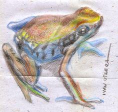 rana en lapices de colores