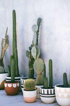 Opvallende potten met cactussen voor in huis