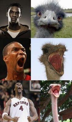 Funny NBA | Chris Bosh Funny Photos | NBA FUNNY MOMENTS