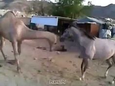 A strange reaction of a horse when meeting his old friend