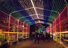 Tunnel of lights at Lincoln Park Zoo's ZooLights during the winter holidays