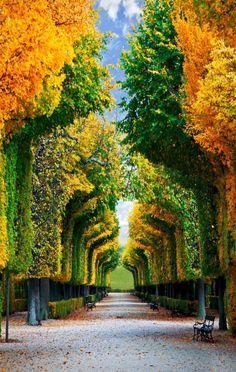 Fascinante túnel de árvores nos Jardins Schonbrunn, em Viena, Áustria.