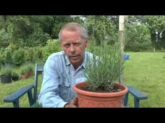 Lavendel Stecklinge, Lavendula vermehren - YouTube