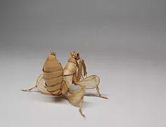 Hymenopus coronatus-05