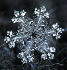 Real Snowflake by Olga & Alexey Snowflake Photography, Macro Photography, Travel Photography, Nature Pictures, Cool Pictures, Paper Snowflake Designs, Snowflake Pictures, Oc Pokemon, Frozen Bubbles