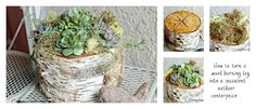 birch log succulent centerpiece, flowers, gardening, outdoor living, succulents