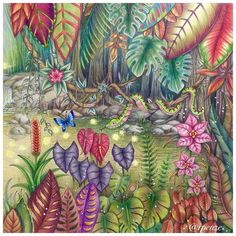 "725 Likes, 18 Comments - Rosana Penze (@rpenze) on Instagram: ""Magical Jungle @johannabasford #rpenze ##lapisdecor #polychromos #holbeincolorpencil…"""